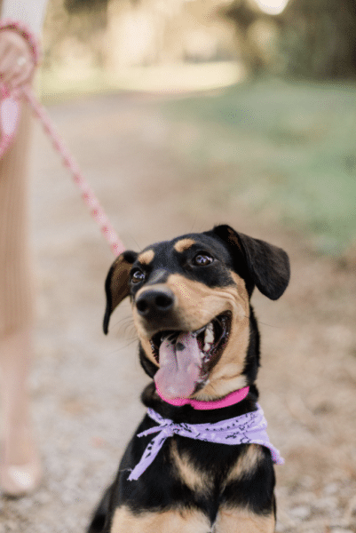 where to find the cutest dog bandanas